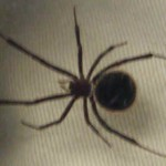 female-black-widow-top